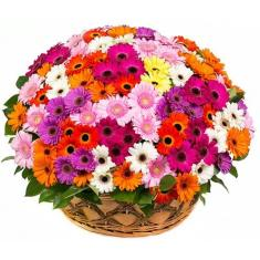 "Basket ""101 colored gerbera"""