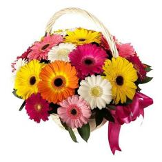 "Basket ""21 colored gerbera"""