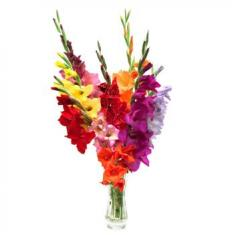"Bouquet ""Colorful gladioli"""