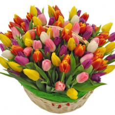 "Basket ""101 color Tulip"""