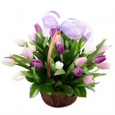 "Basket ""25 colored tulips"""