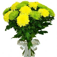 "Bouquet ""15 yellow and green chrysanthemums"""
