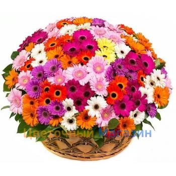 "Basket ""101 colored gerbera""Basket ""101 colored gerbera"""