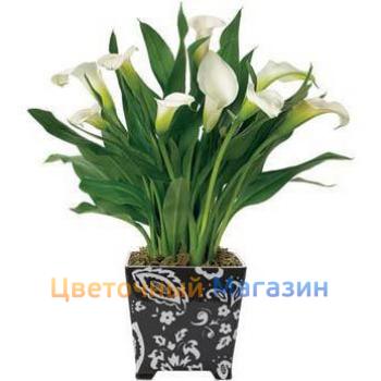 Купить недорого комнатные цветы
