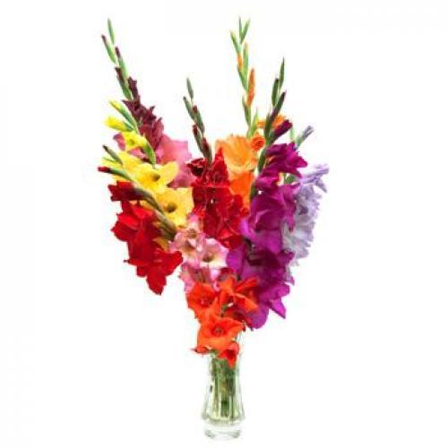 Gladioli Beautiful Bouquet Of 9 Multi Colored Gladioli Buy Flowers